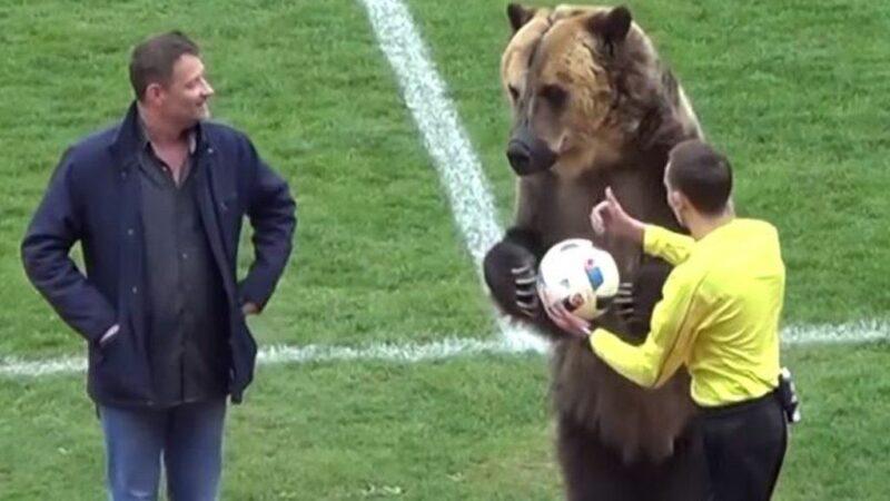 戰鬥民族不養熊了?俄羅斯將成為歐洲第三大電動市場!
